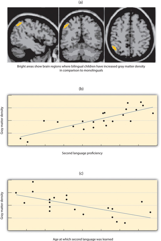 Gray Matter Density Increases During >> Bilingualism And Cognitive Development Open Textbooks For Hong Kong