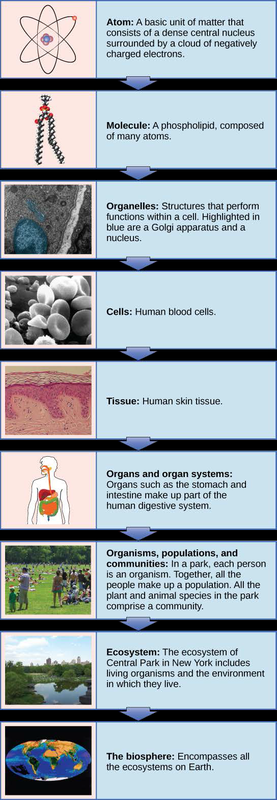 Levels of Organization of Living Things | Open Textbooks for